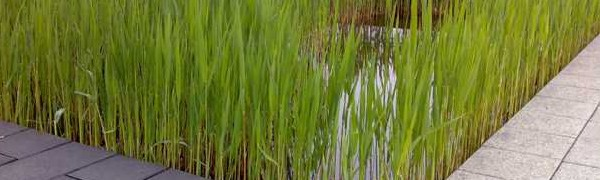 Constructed Wetlands for Water purification and Water Retention